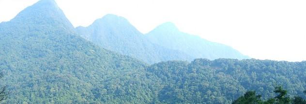 Image by http://en.wikipedia.org/