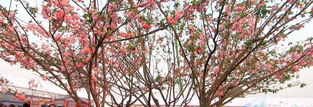 Image by http://www.halongbaytourism.org/